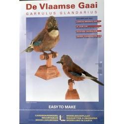 Bouwplaat De Vlaamse Gaai